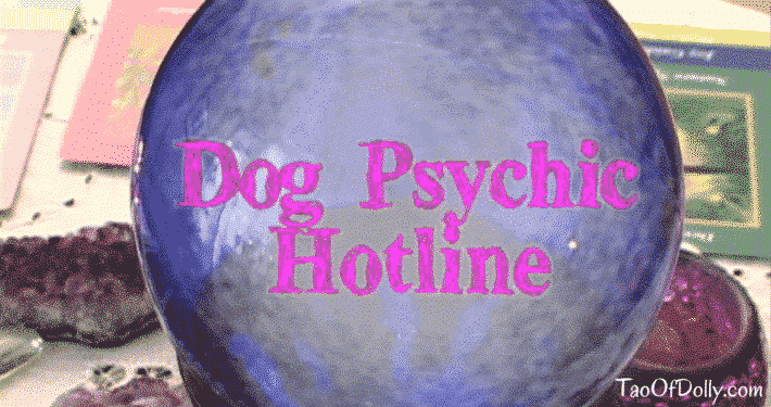 Dolly Psychic Reading