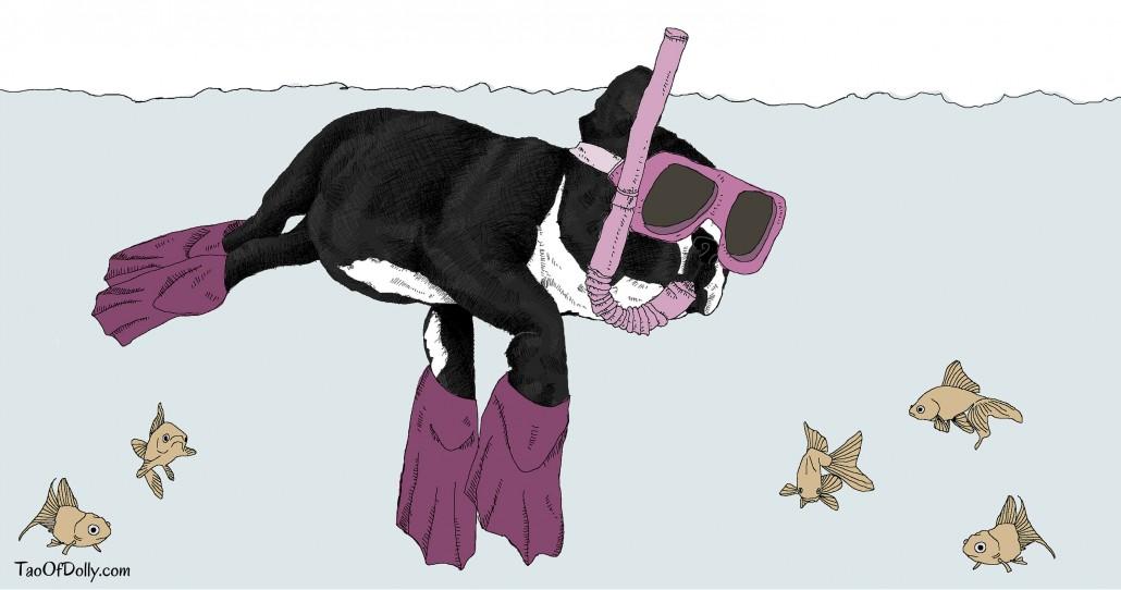 Dolly enjoys Snorkeling